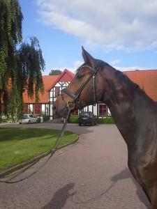 4 års efter Blue Hors Rosoff...skal være Jens Riisagers nye hest